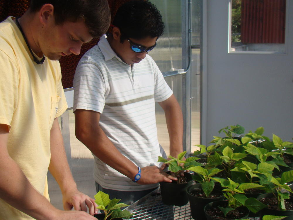 PMHS CTAE Agriscience Poinsettia Propagation Greenhouse